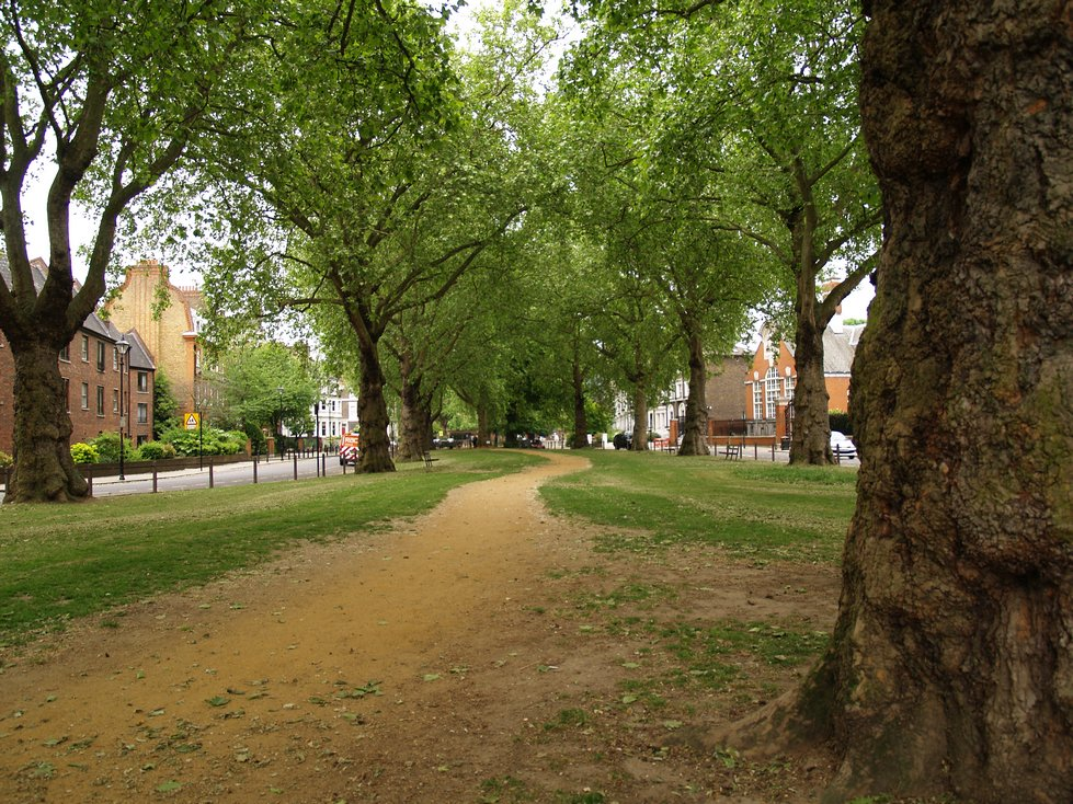 This pathway lined by ancient trees marks the course of Parr's Ditch in Brook Green, Hammersmith