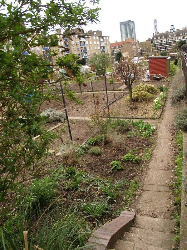 Allotments now cover the site of the Cumberland Market Arm canal basin  between Regent's Park and Euston railway station