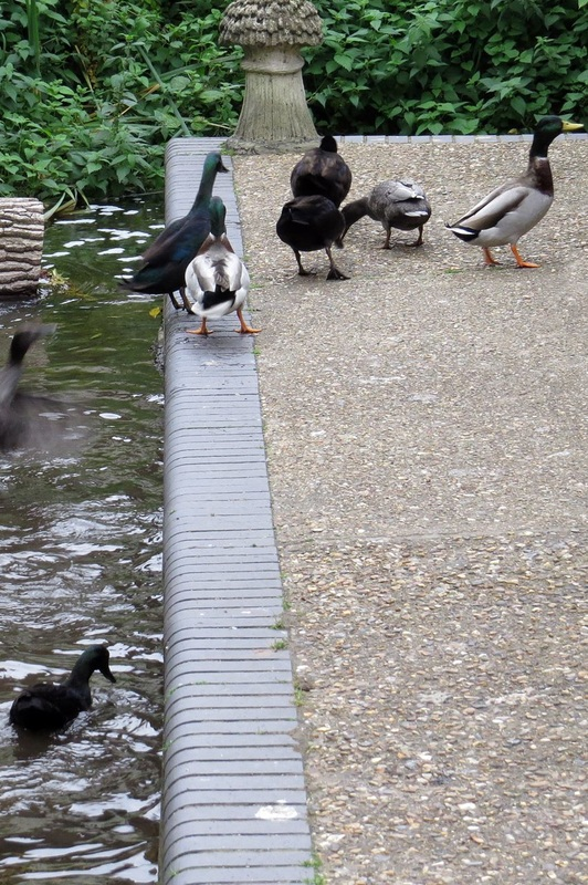 Picture of ducks beside the River Lea in Wheathampstead
