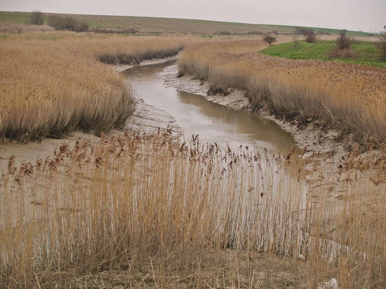 Picture of the tidal Crayford Creek. River Cray towards the River Darent on Dartford Marshes